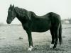 Blackie 1960